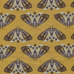 Dwell in Possibility Moth - Umber metallic